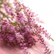 Bouquet of heather flowers over pink — Stock Photo