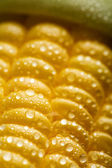 Macro of fresh maize corns — Stock Photo