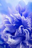 Abstracte blauwe bloem achtergrond — Stockfoto