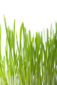 Fresh grass isolated background — Stock Photo