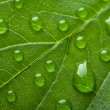 Stock Photo: Fresh green leaf with water droplets