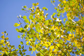 Autumn leaves in the blue sky — Stock Photo