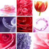 Beautiful flowers collage of nine photos — Stockfoto