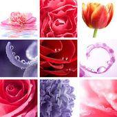 Mooie bloemen collage van negen foto 's — Stockfoto