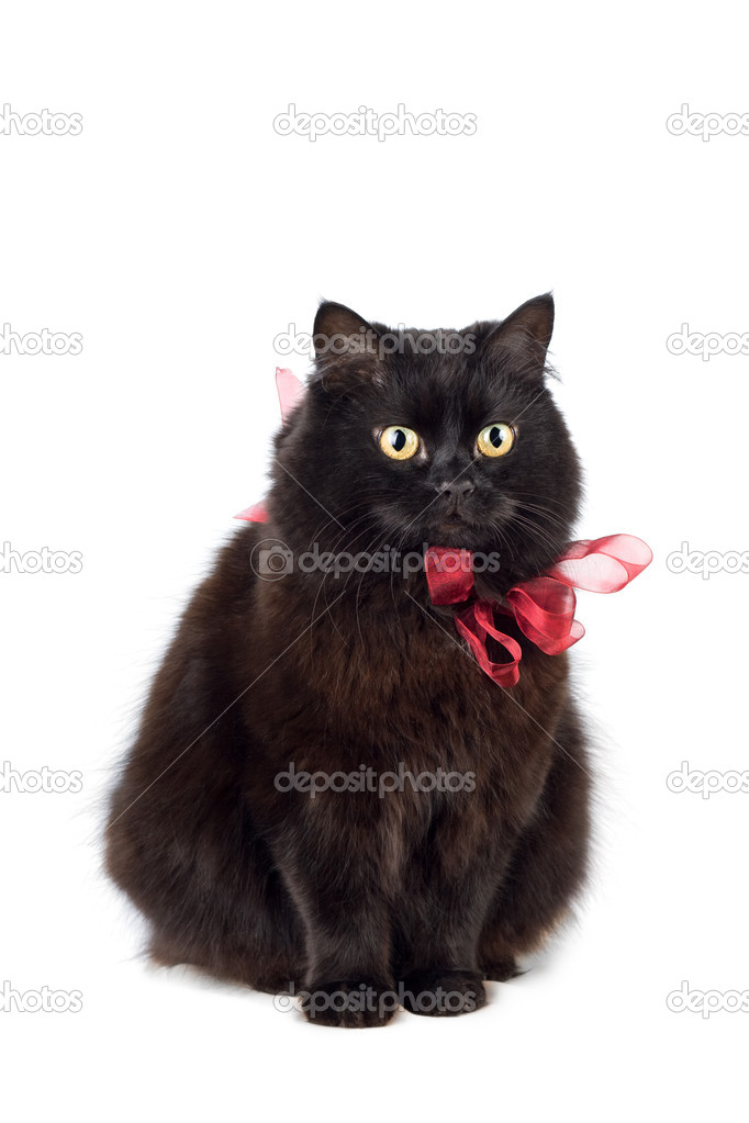 Black cat wearing red bow isolated — Stock Photo #2165825