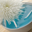 White flower floating in bowl — Stock Photo