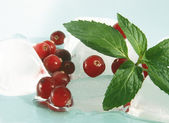 Cranberry and ice — Stock Photo