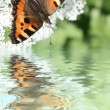 Background with the butterfly — Lizenzfreies Foto
