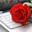 Royalty-Free Stock Photo: Rose on the keyboard