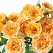 Yellow roses — Stock Photo #1514678