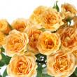 Yellow roses — Stock Photo #1514678