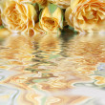 Yellow roses — Stock Photo #1514687