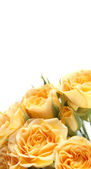 Background with a yellow rose — Foto de Stock