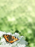 Background with the butterfly — Stock Photo