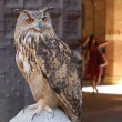 Eagle owl — Stock Photo #1516883
