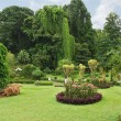 Stock Photo: Botanical Garden, Kandy