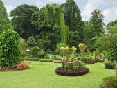 Botanical Garden, Kandy — Stock Photo
