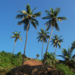 Stock Photo: Coconut palms on the beach . Arambol