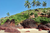 Coconut palms on the beach . Arambol — Stock Photo