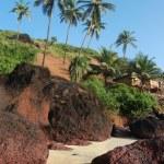 Coconut palms on the beach — Stock Photo