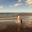 Seagull on the beach - Foto Stock