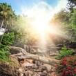 Picture of tropical background — Stock Photo #1421670