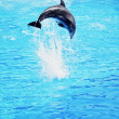 Dolphin jumping in the sea - Stock Photo