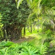 Picture of a tropical forest background — Stock Photo #1421716