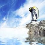 photo d'un pingouin — Photo