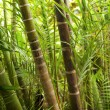 Picture of a tropical forest background - Stock Photo