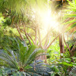 Picture of a tropical forest background — Stock Photo #1421981