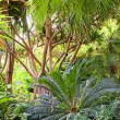 Picture of a tropical forest background — Stock Photo #1422003