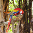 Colorful parrot sitting on the tree - Stock Photo
