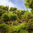 Picture of a tropical background — Stock Photo