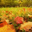 Foto Stock: Autumn leaves background
