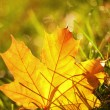 Close-up of autumn leaf - Stock Photo