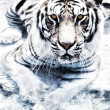 Picture of a silver tiger - Stock Photo