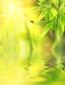 Mariquita sentado en un bambú hojas — Foto de Stock