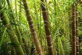 Bild von einem tropischen wald-hintergrund — Stockfoto