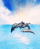 Dolphins jumping in the sea — Stock Photo
