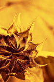 Flower close-up shot — Stock Photo