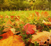 Autumn leaves background — Foto Stock