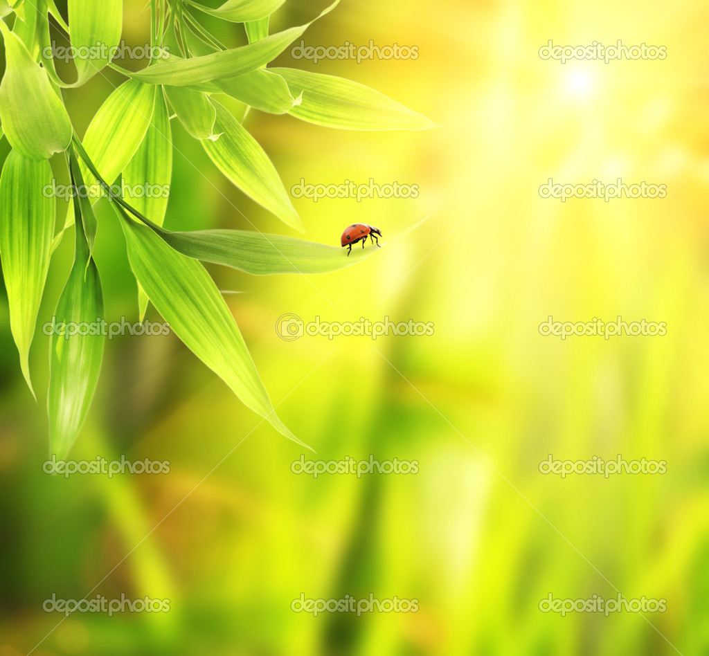 Ladybird sitting on a bamboo leaves — Stock Photo #1421846