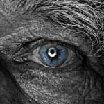 monochromatyczne obraz ludzkiego oka — Zdjęcie stockowe