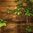 Wooden texture with green leaves — Stock Photo