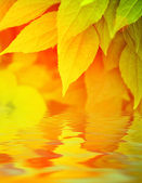 Autumn leaves reflected in water — 图库照片