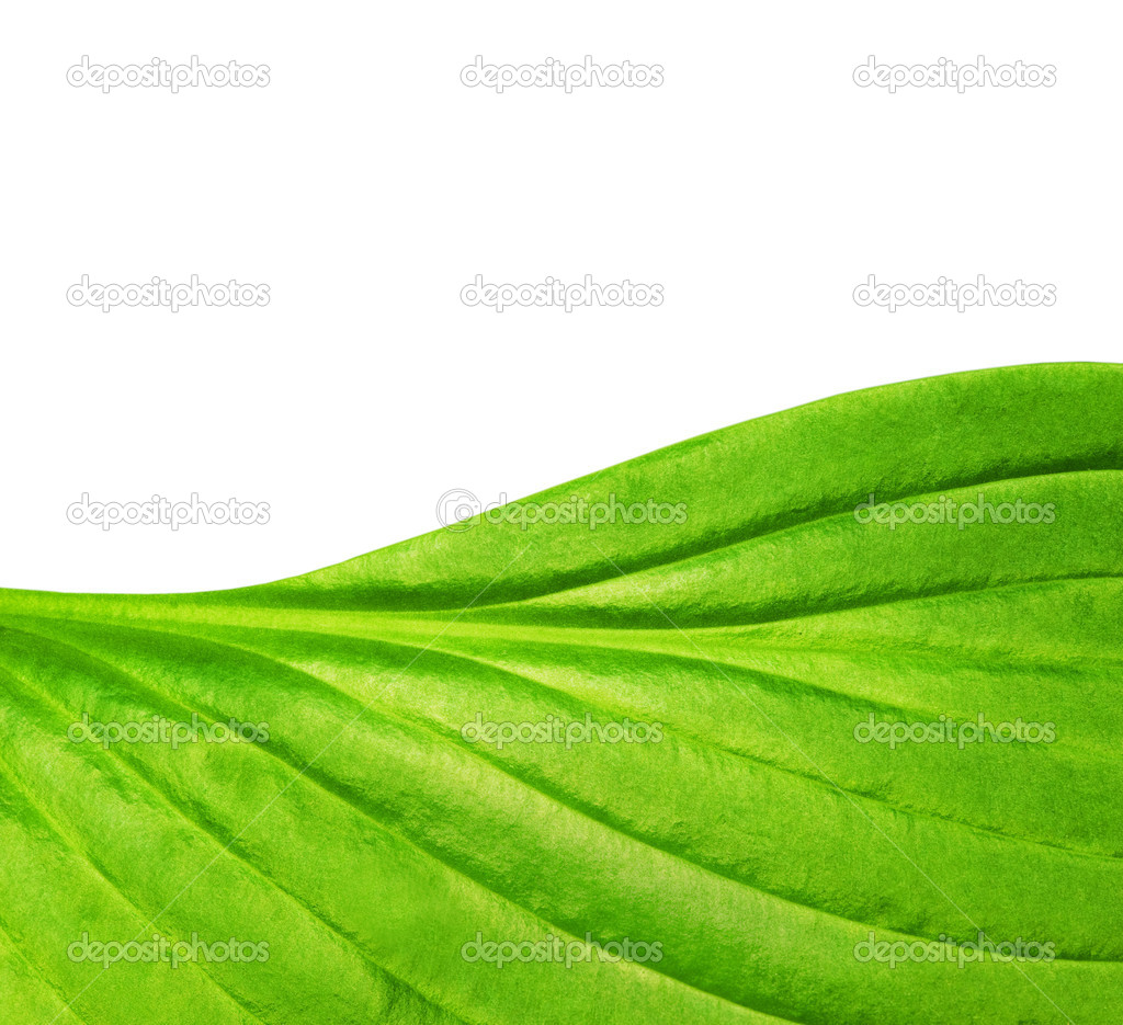 Green leaf texture — Stock Photo #1728209