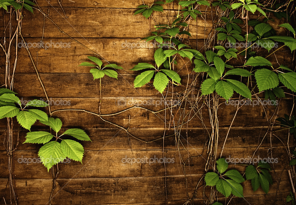 Abstract wooden texture with green leaves — Stock Photo #1728756