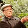 Happy elderly man in a garden — Stock Photo