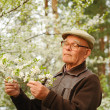 Elderly man working in a garden — Stock Photo #1740935